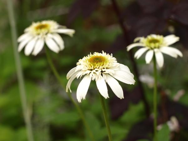 f:id:m-garden-life:20160615165055j:plain