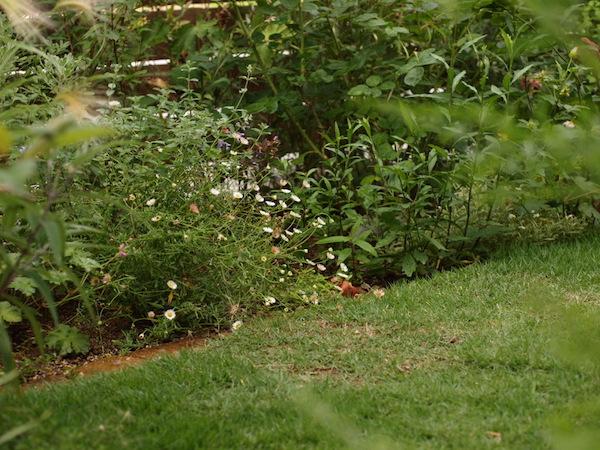 f:id:m-garden-life:20160615165203j:plain