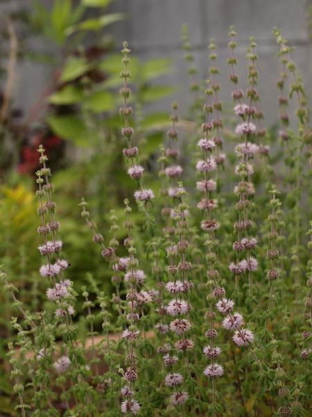 f:id:m-garden-life:20160617160228j:plain