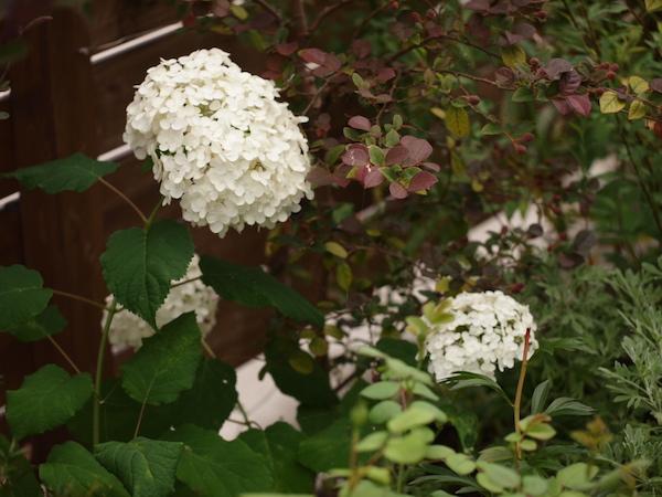 f:id:m-garden-life:20160617161039j:plain