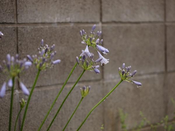 f:id:m-garden-life:20160622161552j:plain