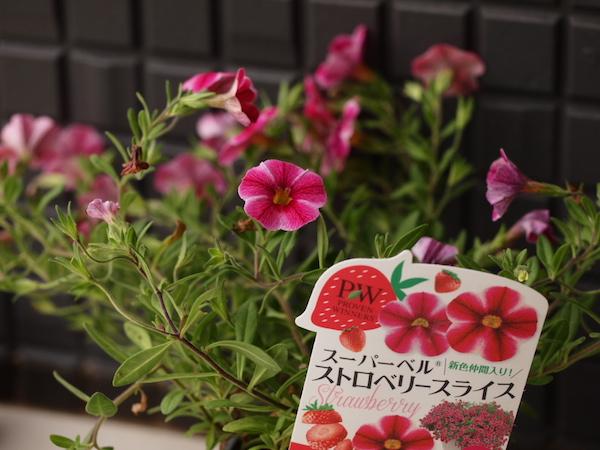 f:id:m-garden-life:20160622162940j:plain