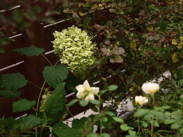 f:id:m-garden-life:20160629155601j:plain