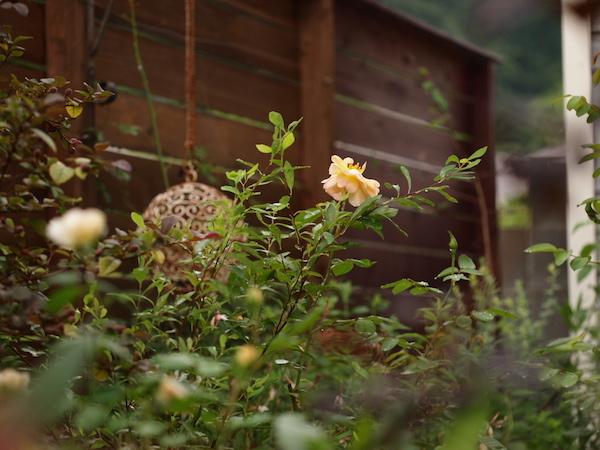 f:id:m-garden-life:20160629155851j:plain