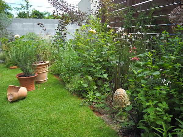 f:id:m-garden-life:20160703104623j:plain