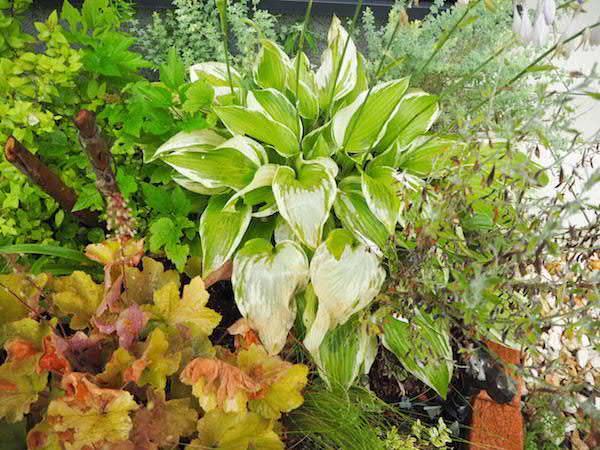 f:id:m-garden-life:20160708172824j:plain