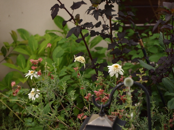 f:id:m-garden-life:20160710182349j:plain