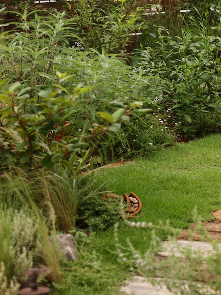 f:id:m-garden-life:20160716110708j:plain