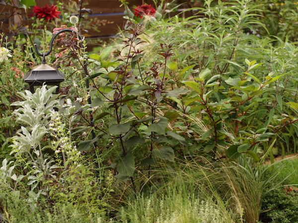 f:id:m-garden-life:20160716110850j:plain