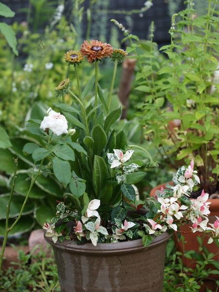 f:id:m-garden-life:20160720153414j:plain