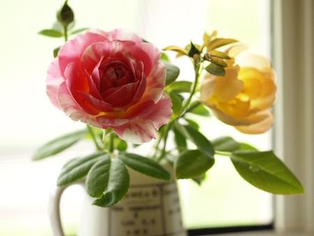 f:id:m-garden-life:20160724083651j:plain