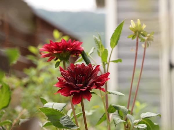 f:id:m-garden-life:20160724160619j:plain