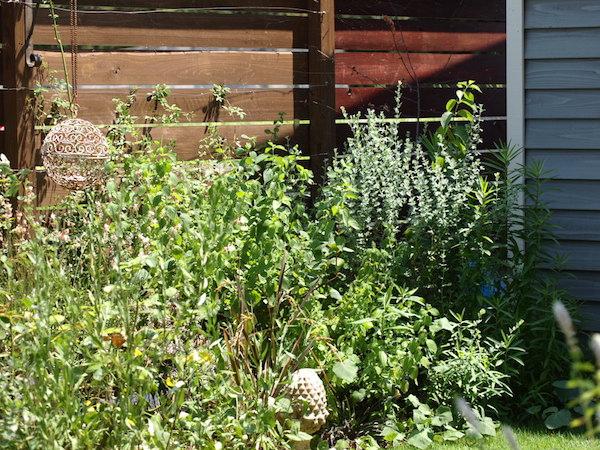 f:id:m-garden-life:20160731141817j:plain