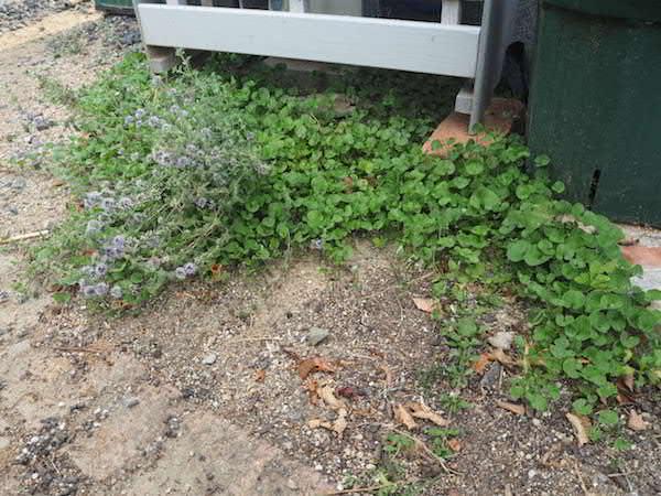 f:id:m-garden-life:20160807182323j:plain