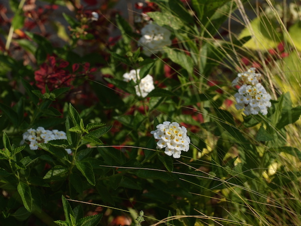f:id:m-garden-life:20160813100118j:plain