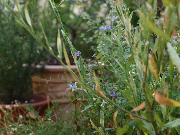 f:id:m-garden-life:20160813101518j:plain