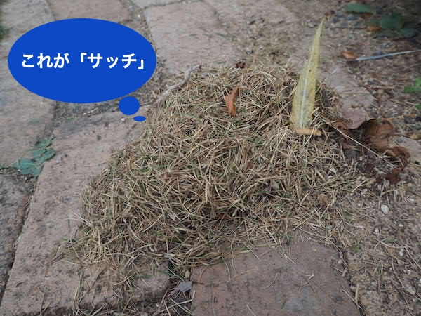 f:id:m-garden-life:20160817090857j:plain