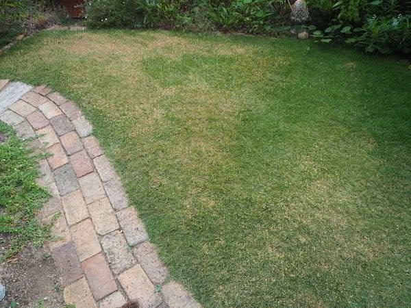 f:id:m-garden-life:20160817091153j:plain