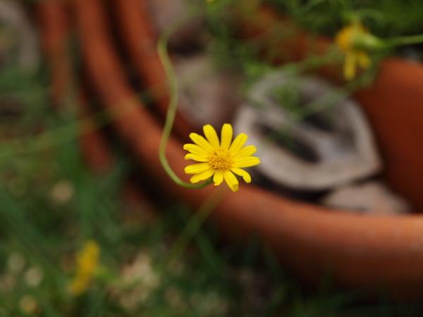 f:id:m-garden-life:20160825163915j:plain