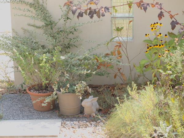 f:id:m-garden-life:20160827114435j:plain