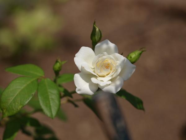 f:id:m-garden-life:20160903115834j:plain