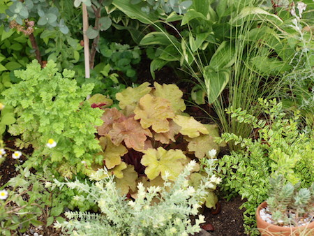 f:id:m-garden-life:20160904171701j:plain