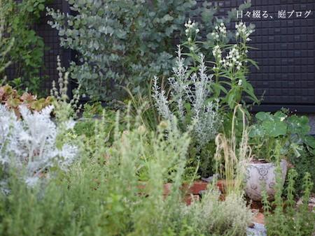 f:id:m-garden-life:20160904171713j:plain