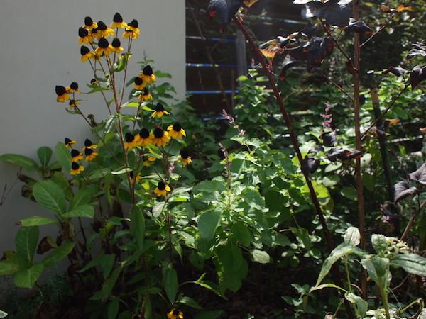 f:id:m-garden-life:20160910120351j:plain