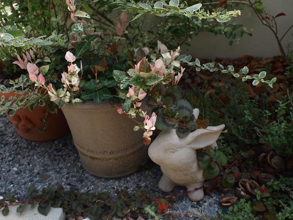 f:id:m-garden-life:20160910120410j:plain