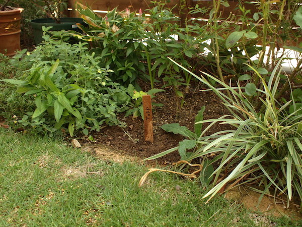 f:id:m-garden-life:20160911093044j:plain