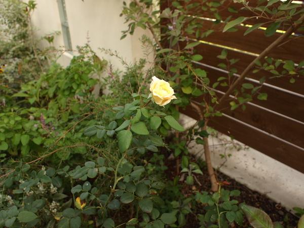 f:id:m-garden-life:20160913152254j:plain