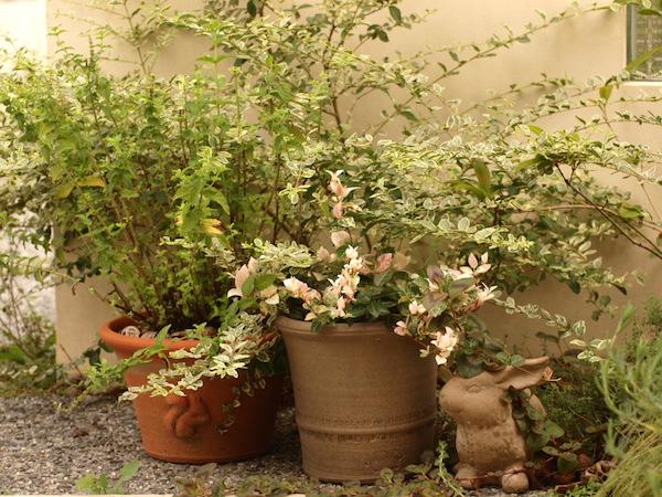 f:id:m-garden-life:20160915154856j:plain