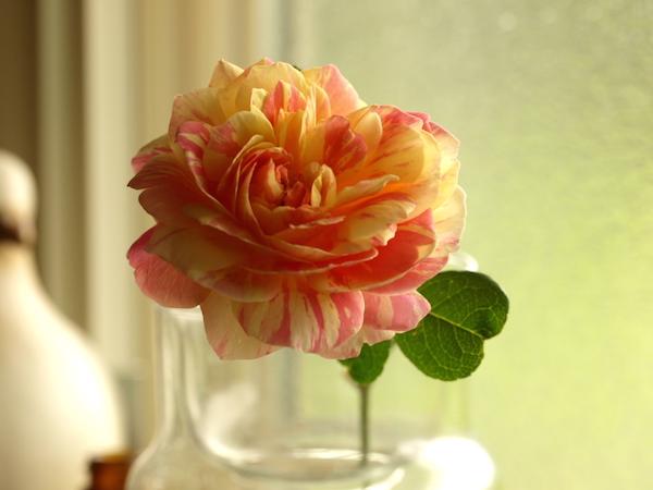f:id:m-garden-life:20160918121323j:plain