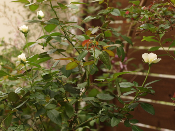 f:id:m-garden-life:20160921175151j:plain