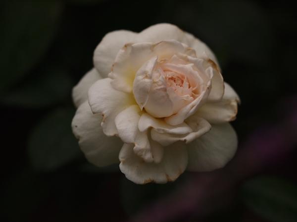 f:id:m-garden-life:20160923150931j:plain