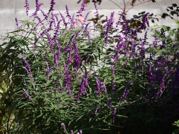 f:id:m-garden-life:20161002101015j:plain