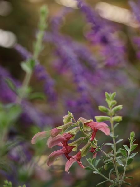 f:id:m-garden-life:20161005154959j:plain