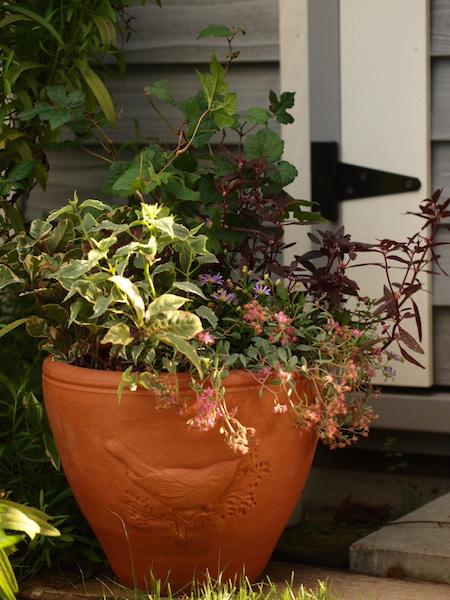 f:id:m-garden-life:20161005155357j:plain