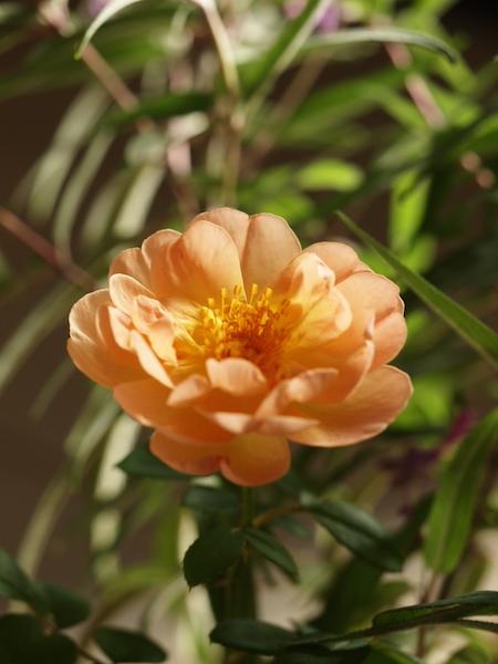 f:id:m-garden-life:20161006170457j:plain