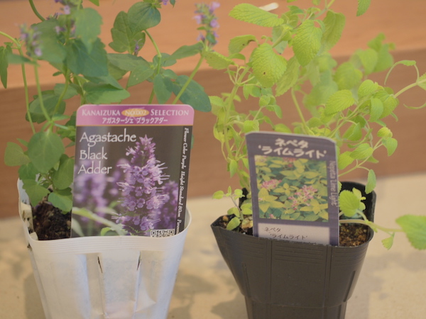 f:id:m-garden-life:20161006170805j:plain