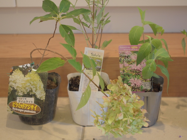 f:id:m-garden-life:20161006170817j:plain