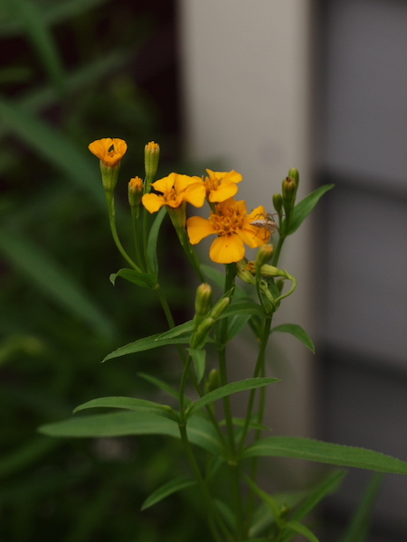 f:id:m-garden-life:20161007171339j:plain