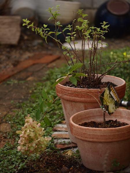 f:id:m-garden-life:20161010095256j:plain