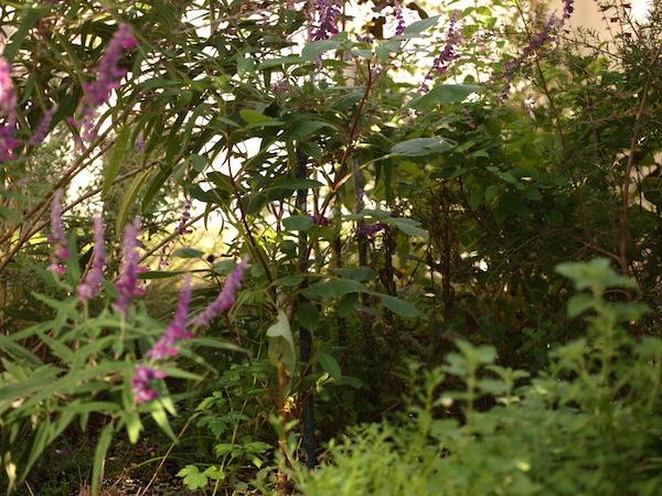 f:id:m-garden-life:20161010095538j:plain