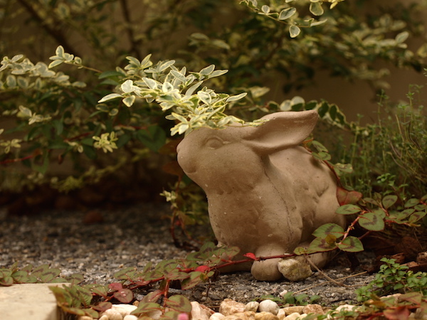 f:id:m-garden-life:20161011162107j:plain