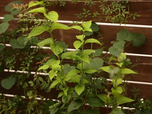 f:id:m-garden-life:20161013162820j:plain