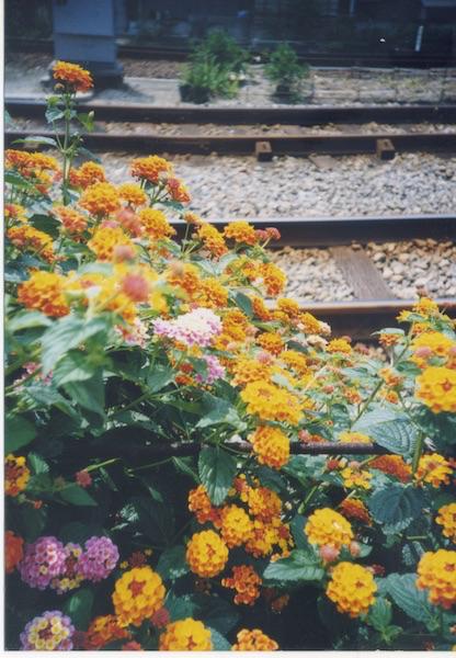f:id:m-garden-life:20161014171818j:plain