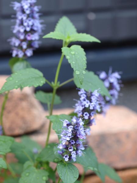 f:id:m-garden-life:20161018153347j:plain