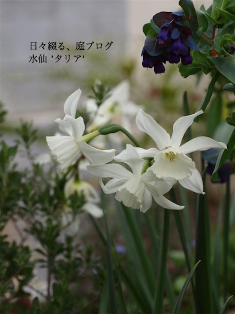 f:id:m-garden-life:20161020191805j:plain