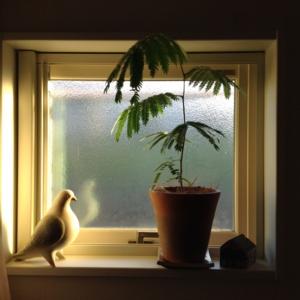 f:id:m-garden-life:20161024164753j:plain